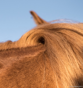 horsebarbaramurray-5