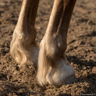horsebarbaramurray-7