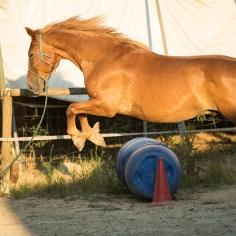 horsehumanmovement-12