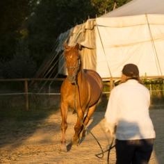 horsehumanmovement-13