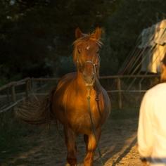 horsehumanmovement-15