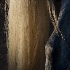 horsescapes-12