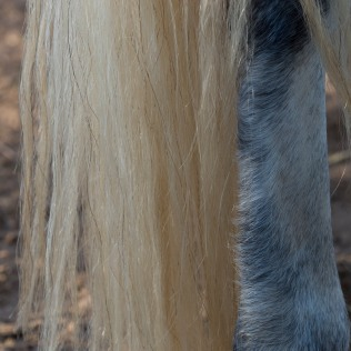 horsescapes-14