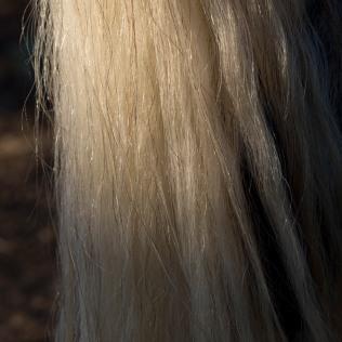 horsescapes-15