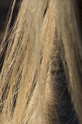 horsescapes-16