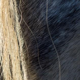 horsescapes-17