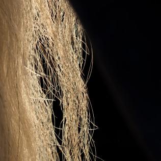 horsescapes-18