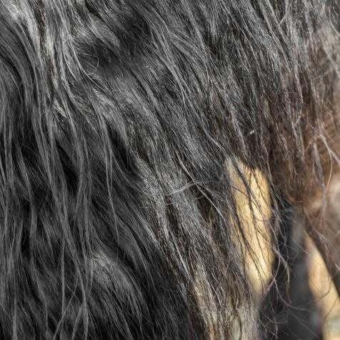 horsescapes-2