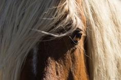 Horsescapes-3