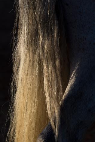 horsescapes-6