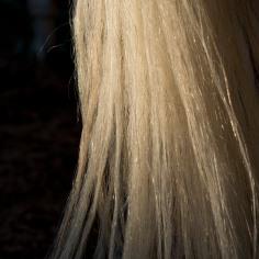 horsescapes-8