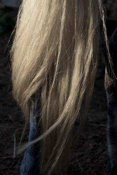 horsescapes-9