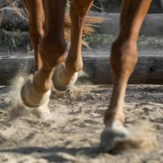 HorseScapes5-2015-10