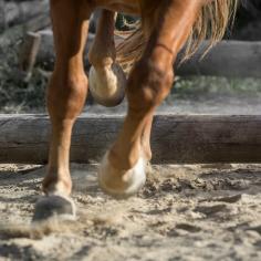HorseScapes5-2015-11
