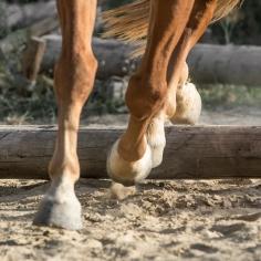 HorseScapes5-2015-12