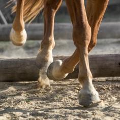 HorseScapes5-2015-13