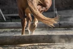 HorseScapes5-2015-15