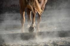 HorseScapes5-2015-16