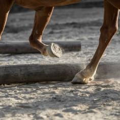 HorseScapes5-2015-17