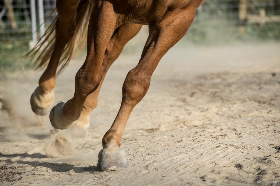 HorseScapes5-2015-18
