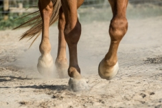 HorseScapes5-2015-19