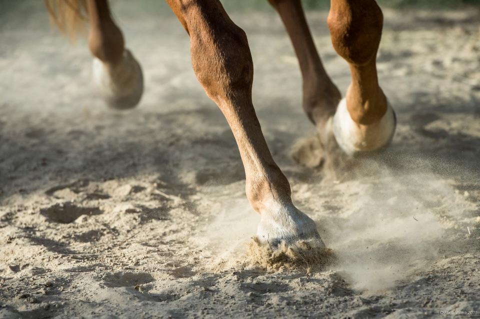 HorseScapes5-2015-2