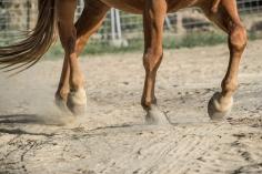 HorseScapes5-2015-20