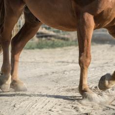 HorseScapes5-2015-23