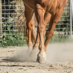 HorseScapes5-2015-27