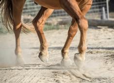HorseScapes5-2015-28