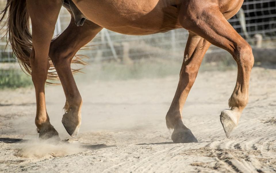 HorseScapes5-2015-29