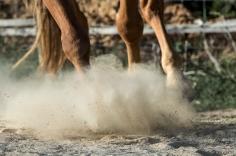 HorseScapes5-2015-3