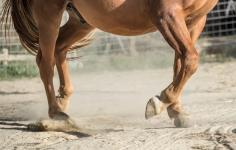 HorseScapes5-2015-30