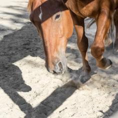 HorseScapes5-2015-31