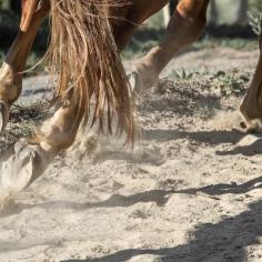 HorseScapes5-2015-32