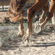 HorseScapes5-2015-33