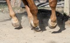 HorseScapes5-2015-34