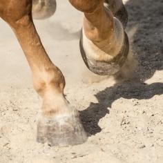 HorseScapes5-2015-37