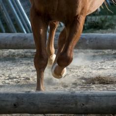 HorseScapes5-2015-4