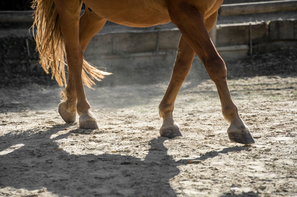 HorseScapes5-2015-40