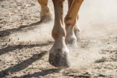 HorseScapes5-2015-41