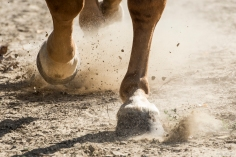 HorseScapes5-2015-42