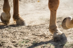 HorseScapes5-2015-43