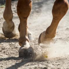 HorseScapes5-2015-44