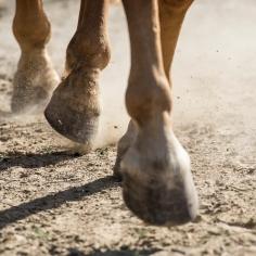 HorseScapes5-2015-45