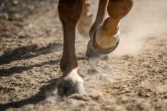 HorseScapes5-2015-46