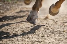 HorseScapes5-2015-48
