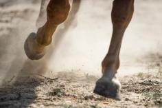 HorseScapes5-2015-49