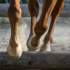 HorseScapes5-2015-5