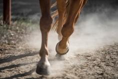 HorseScapes5-2015-50